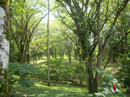 (MN-320) 34 BEAUTIFUL ACRES LOCATED IN TIERRA OSCURA