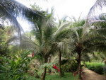(CO-1500) BLUFF BEACH JUNGLE LOTS